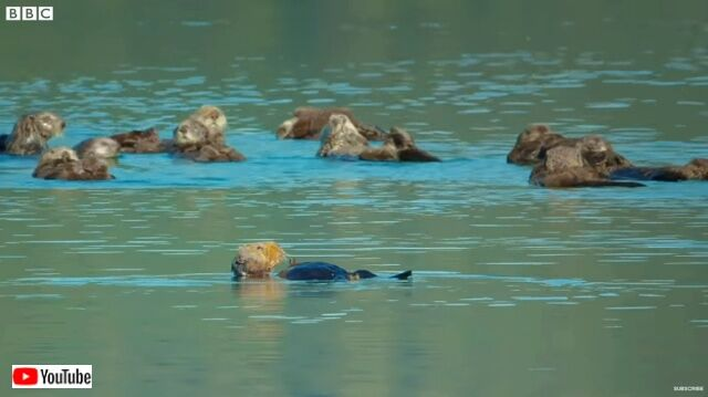 seaotters1_640