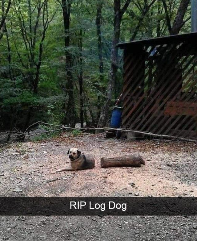 hilarious-dog-snapchats20_e