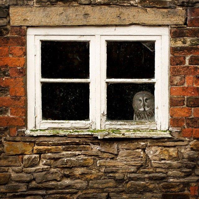 owl-photography-26__880_e