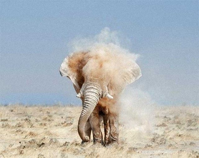elephant2_e