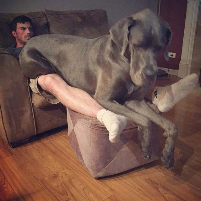 big-puppy13_e