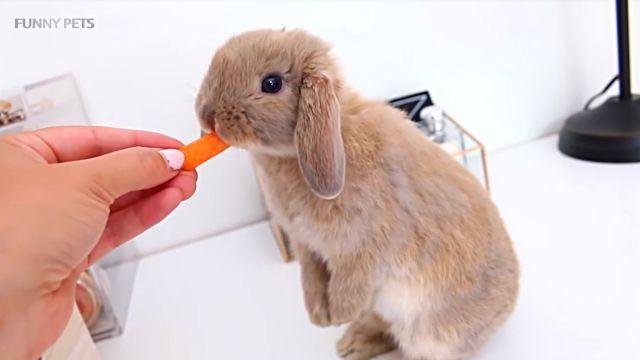 cuterabbits2