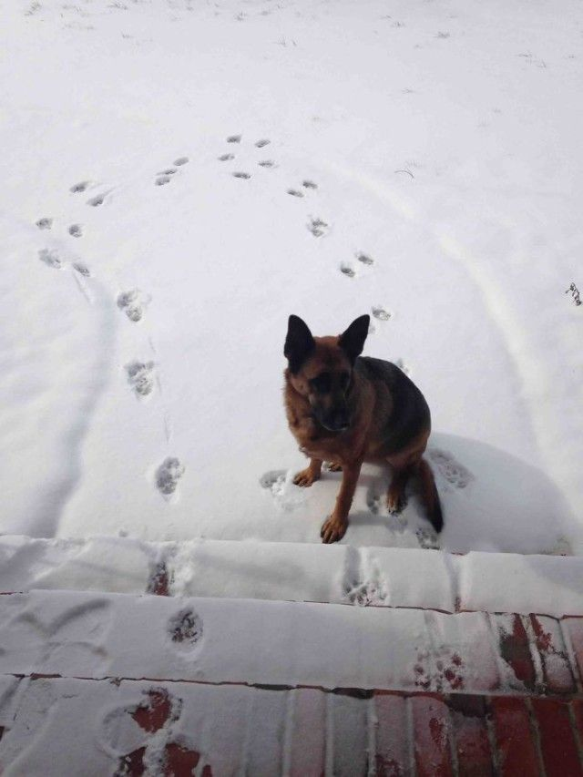 funny-animals-first-snow-cats-dogs26_e