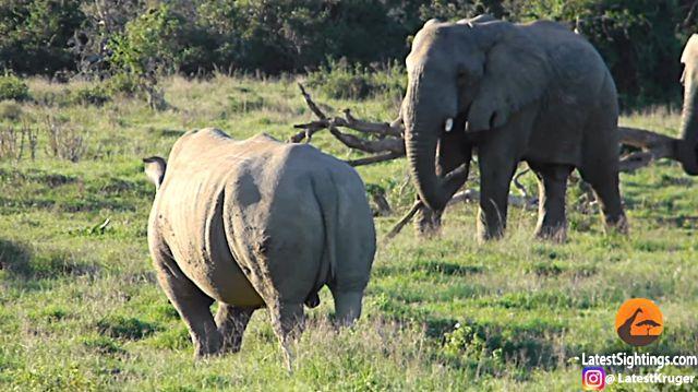 elephantnrhino2