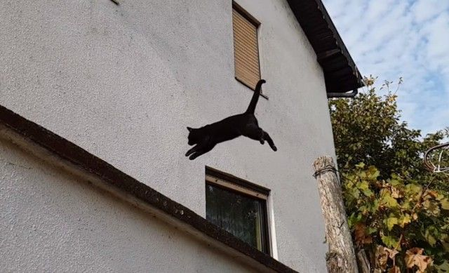jumpingkitten4_e