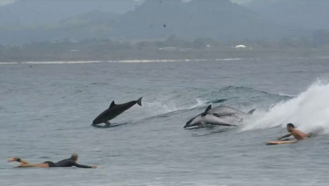 dolphinsnsurfers0_e