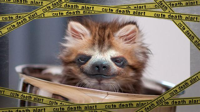 sloth-kitten1 [www-frame