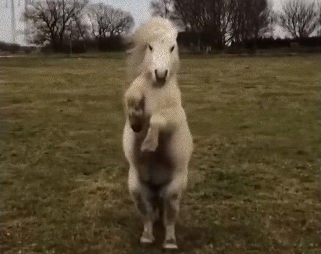 funnyhorses8_e