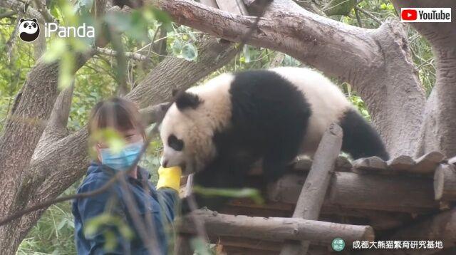panda3_640