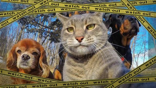 selfie-1 [www-frame