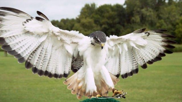 slowmobirds7_e
