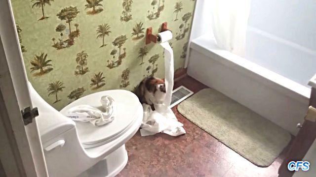 toiletpaper7