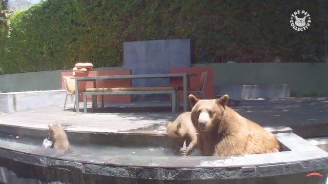 bearsbears0_e