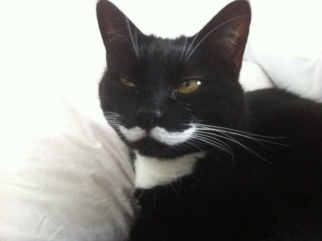 mustaches16_e