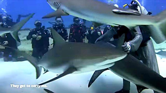 dolphinshark7