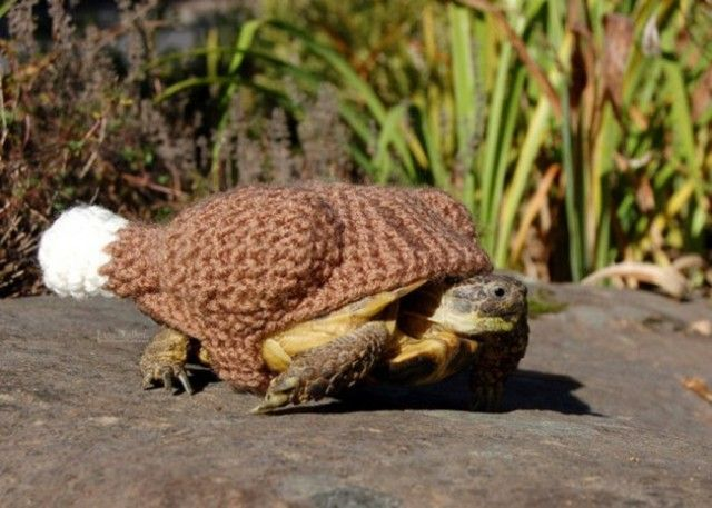 sweater-tortoise-cooked-turkey_e