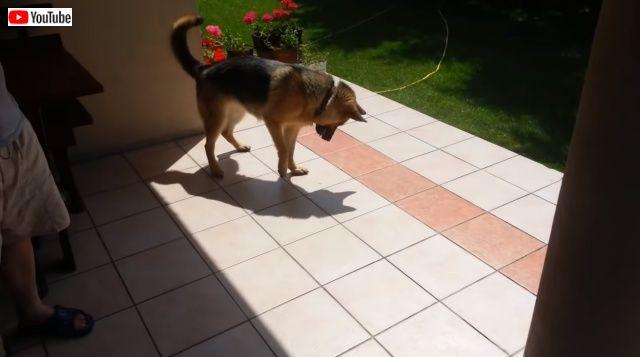 dognshadow2_640_e_640