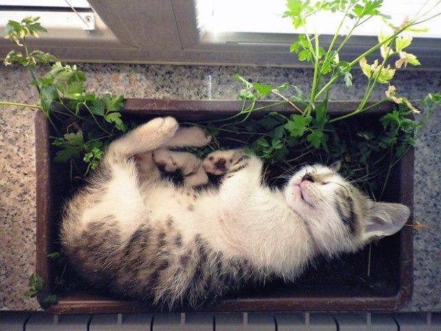 cat-plant3_e
