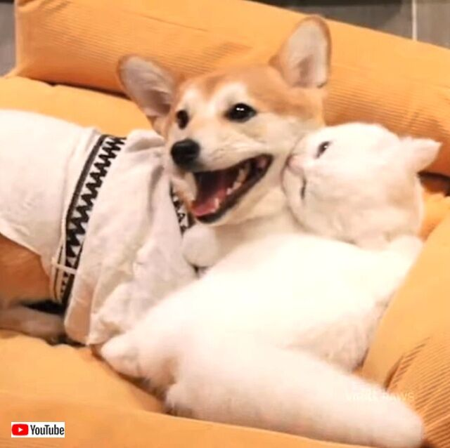 doggonkitty3_640
