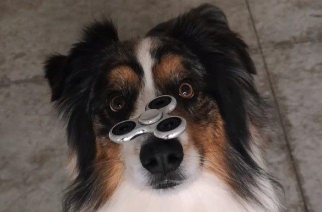 spinnerdog2_e