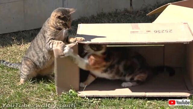 12cats8boxes5_640