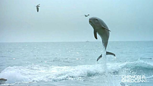 dolphinkiss4