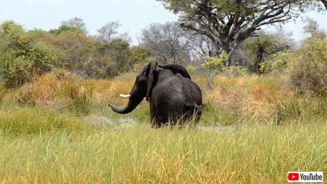 elephanttantrum5_640