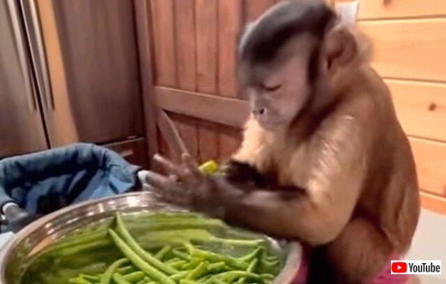 monkey3_640