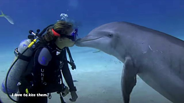 dolphinshark5