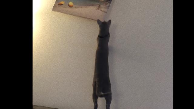cat-f_e