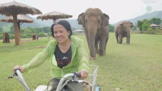 elephantsnbicycle0_e
