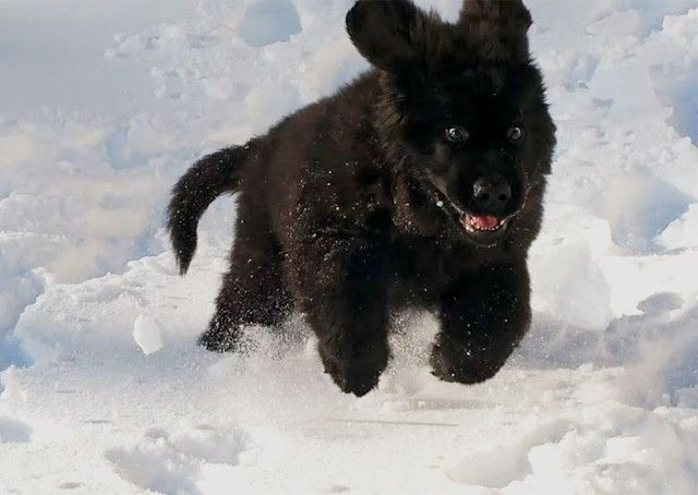 funny-animals-first-snow-cats-dogs37_e