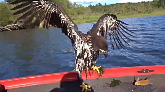 eaglesave7