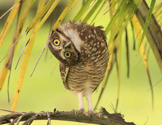 owl-photography-6__880_e