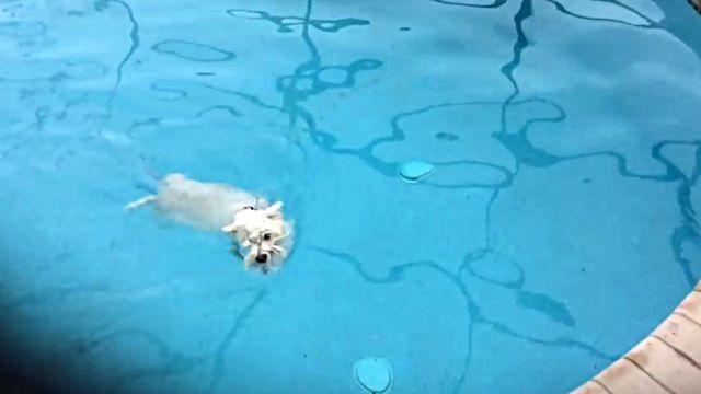 pooldog5