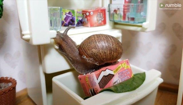 snail5_e
