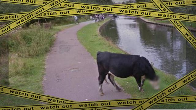 cow-1 [www-frame