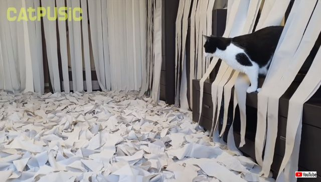 toiletpaperheaven4_640
