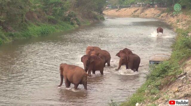 elephantscalled2_640