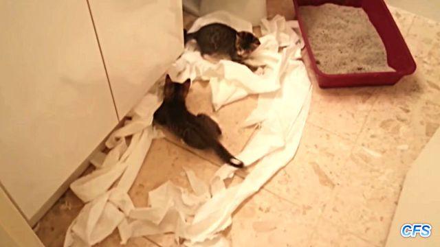toiletpaper5