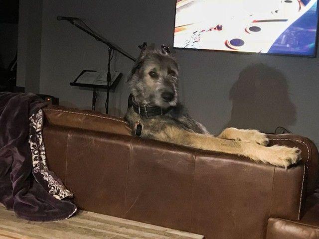 Funny-Irish-Wolfhounds-104-5c2f2585f1f42__700_e