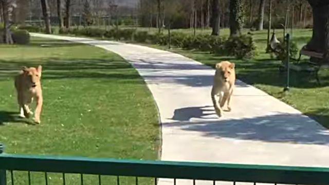 lionhug1