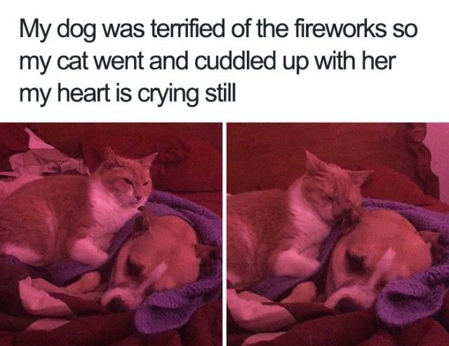funny-wholesome-animal-memes-26-58f0999305d78__700_e