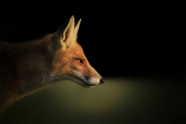 fox7_e