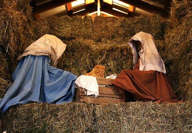 cats-crashing-nativity-scenes-106-5a27c862338b9__605_e