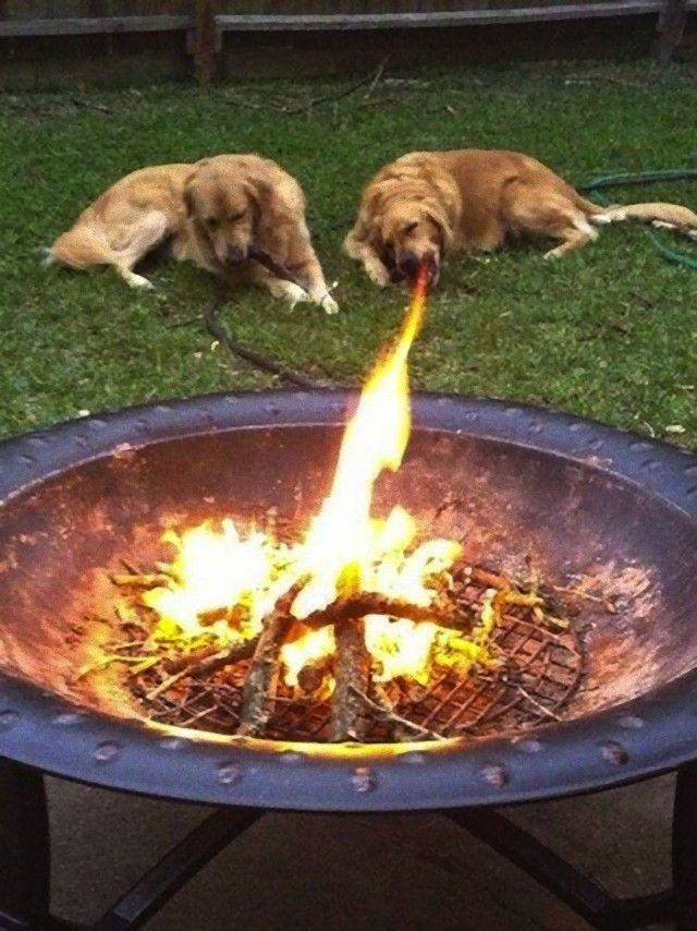 perfectly-timed-photos-dogs-9_e