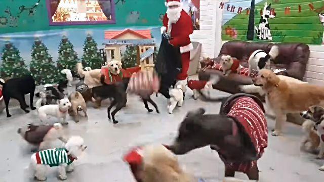 santadogs0