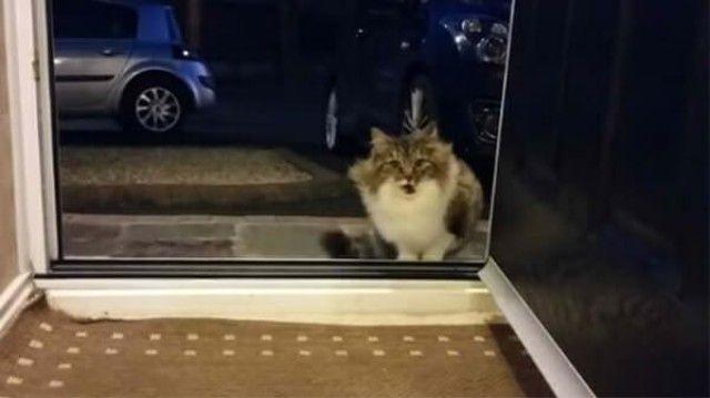 cat-1 (1)