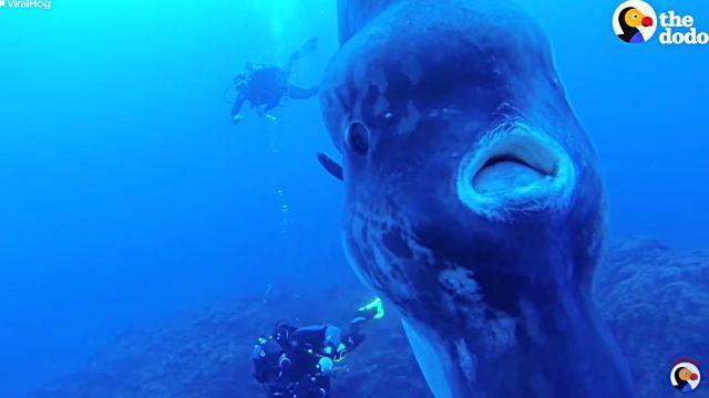 sunfish2