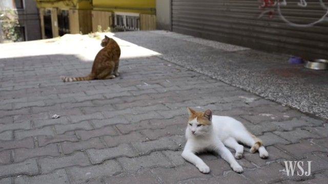 istanbulcats8_e